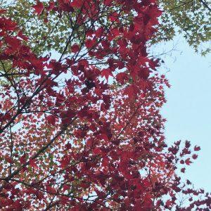 今日で11月最後ですね💦紅葉狩りがまだの方は、お急ぎください😲