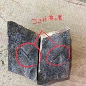 化石発掘体験センターへ行ってきました!大野市は地層の宝庫だそうです(◍´◡`◍)