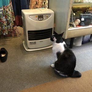 🐈猫が暖をとっていました🐈